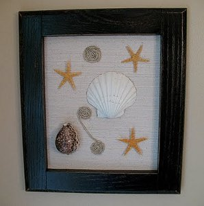Funky Framed Seashells