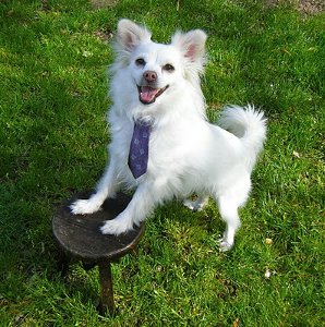 Puppy Necktie 1 Does Your Pet Wear Clothing?