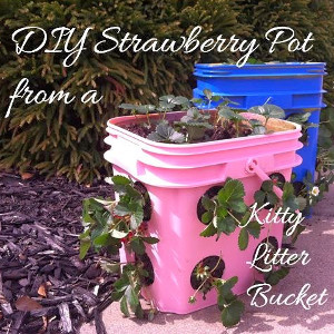 Easy-Peezy Strawberry Pot
