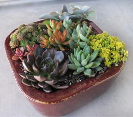 Finished Arrangement 2
