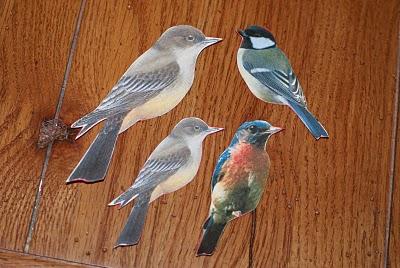 Bird Templates 2